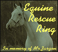 Equine Rescue Stories
